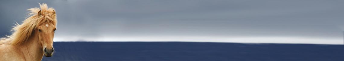 kraftfoder till islandshäst